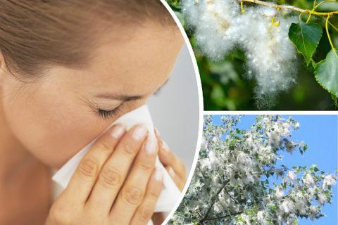 Аллергический бронхит вызывается вдыханием растительных раздражителей.