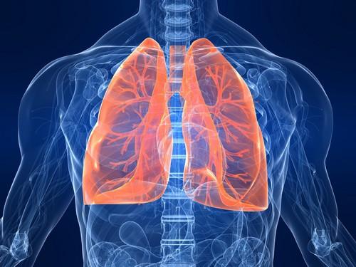 Воспалительный процесс в бронхах провоцируется инфекцией или вредными химическими и механическими агентами.