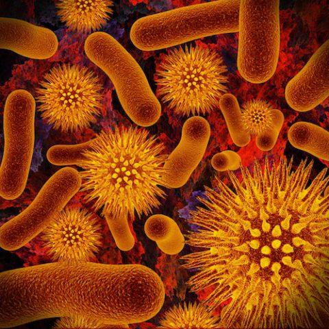 Бактерии, провоцирующие необратимый процесс.