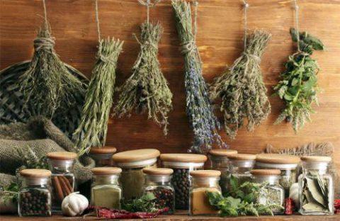 Народные способы лечения кашля и воспалений бронхов основываются на природной силе растений