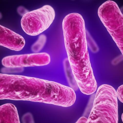 Причиной заболевания становится различная микробная флора