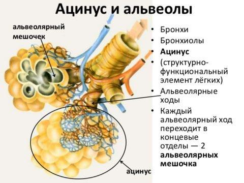 Тип заболевания определяется по локализации повреждения