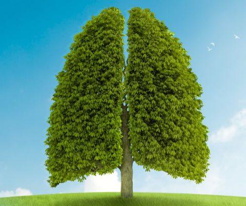 Возможно ли восстановить здоровье легких.