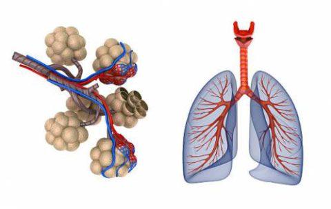 Нарушение газообмена в альвеолах – один из синдромов пневмонитов.