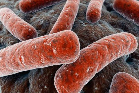 Палочка Коха – возбудитель туберкулеза.
