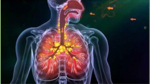 Распространенность и опасность туберкулеза.