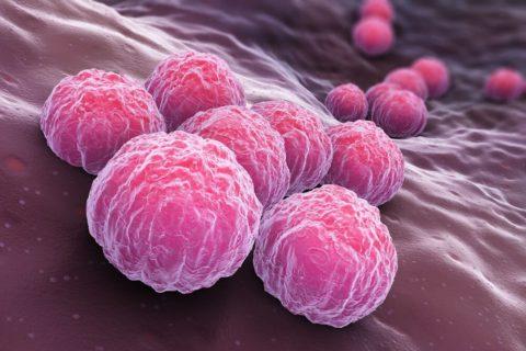 Хламидии - бактерии, вызывающие заболевание