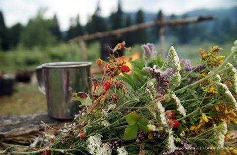 Полезный и вкусный травяной чай поможет избавиться от бронхита и насытит организм витаминами и микроэлементами.
