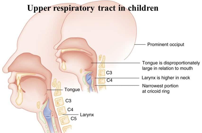 Дыхательная система грудничков имеет свои особенности (см. фото)
