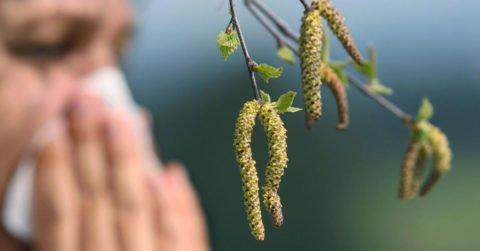 Патология проявляется в период сенной лихорадки.