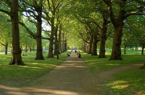 Гулять лучше в парках вдалеке от дорог
