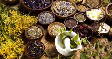 На фото лечебные травы для сборов для борьбы с симптомами бронхита