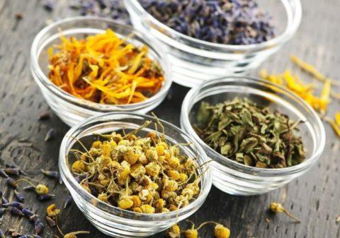Наиболее эффективными отхаркивающими травами считаются мать – и - мачеха, багульник, фиалка, корень солодки и алтея