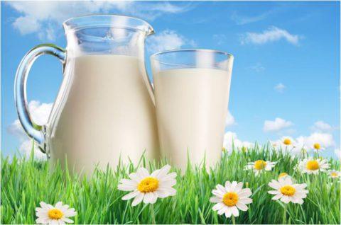 Натуральное молоко идеально сочетается с барсучьим жиром.