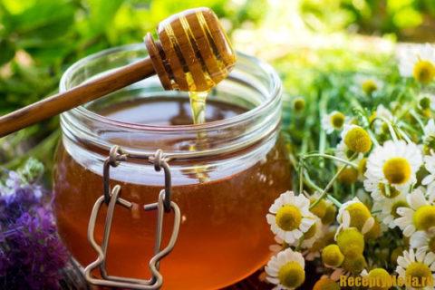 Натуральный пчелиный улучшит вкус жира медведя и усилит его полезные свойства.