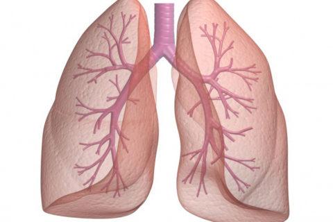 Ослабление функциональности реснитчатого эпителия ведет к развитию бронхита.