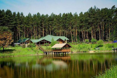 Отдых в хвойном лесу – отличный метод профилактики заболеваний органов дыхания.