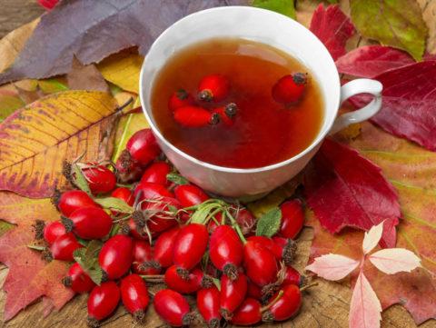 Полезный и вкусный отвар шиповника, представленный на фото, насытит организм витаминами и поможет справиться с бронхитом.