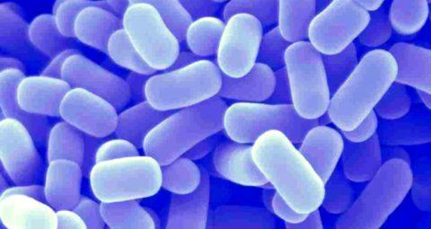 Лактобактерии для лечения заболевания