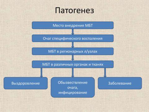 В патогенезе туберкулеза выделяют несколько ключевых моментов