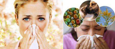 Астматическая форма бронхита может быть вызвана аллергенами и инфекционными возбудителями.