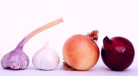 Лук и чеснок богаты бактерицидными фитонцидами и витамином С