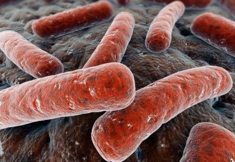 Микобактерия хорошо сохраняет свою жизнедеятельность в окружающей среде.