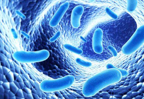 Возбудителями пневмонии могут выступать различные микроорганизмы.