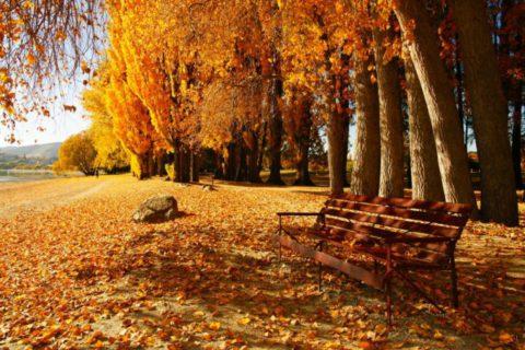 Во время выздоровления лучше выбирать безлюдные места на природе