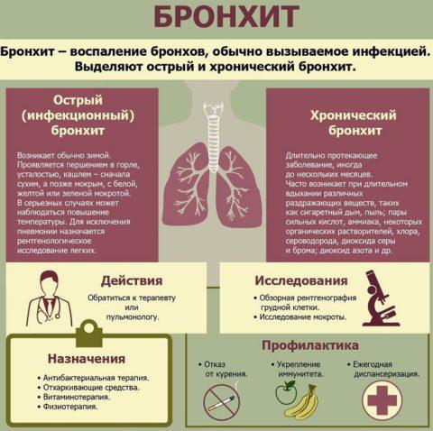 Инфографика – основное, что следует знать о бронхите
