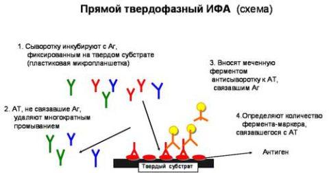 Метод иммуноферментного анализа